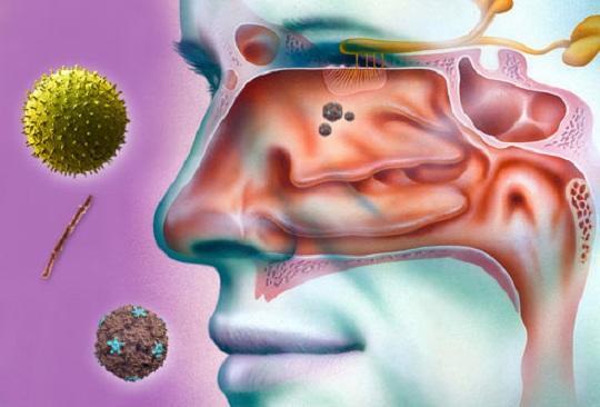 Διαταραχές Όσφρησης : Πρόληψη & Θεραπεία